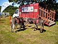 Flickr - ronsaunders47 - DONKEYS AT THE CRAFT FAIR...jpg