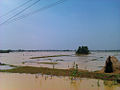 Flood-in-Odisha 2011.jpg