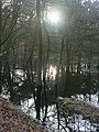 Flooded woodland, near Fleet Pond - geograph.org.uk - 1202573.jpg