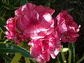 Flor desconocida 2482.jpg