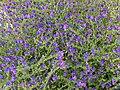 Floral arrangement 005 (5260026226).jpg
