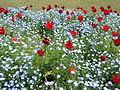 Flower-center134410.jpg