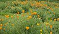 Flower Field (3922785114).jpg