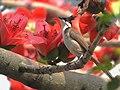 Flower Lover (14195746735).jpg