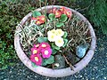 Flower bed outside Auntie Dawn's apartment (3312852101).jpg