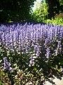 Flowers in Prague Botanic Garden.jpg