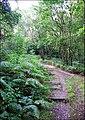 Footpath in Bagnall Woods - geograph.org.uk - 528020.jpg