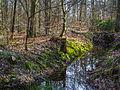 Forêt de Haguenau.jpg