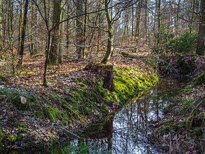 Forest of Haguenau - The forest.