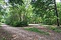 Forêt domaniale de Bois-d'Arcy 17.jpg
