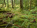 Forest floor - panoramio.jpg