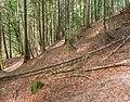 Forest in Morzine (1).jpg