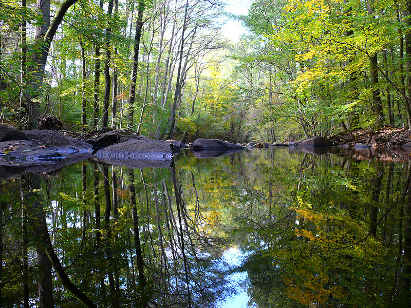 File:Forest reflections.JPG