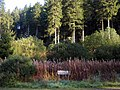 Forest trails in Changue Forest - geograph.org.uk - 333915.jpg