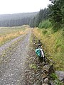 Forestry road at Crooked Braes - geograph.org.uk - 535273.jpg