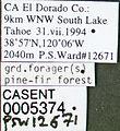 Formica sibylla casent0005374 label 1.jpg