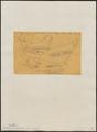 Formicarius melanostictus - 1854 - Print - Iconographia Zoologica - Special Collections University of Amsterdam - UBA01 IZ16400321.tif