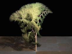 Fractal tree (Plate b - 3).jpg