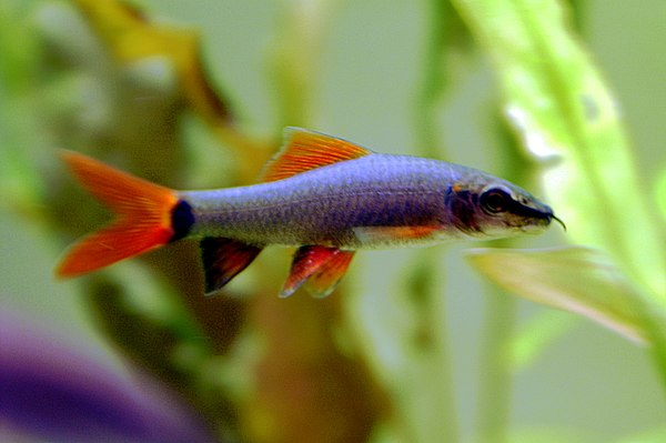 Aquarium for Freshwater fish representative species