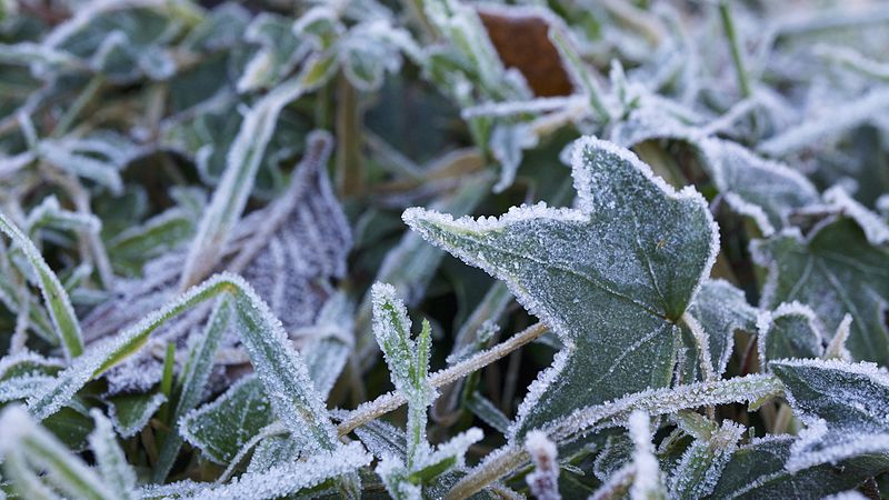 File:Frost in my garden (11621596336).jpg
