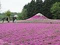 Fuji Shibazakura Festival (35951005825).jpg