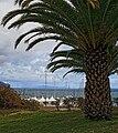 Funchal, am Hafen IMG 2094.JPG