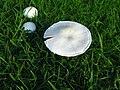 Fungi - geograph.org.uk - 220503.jpg