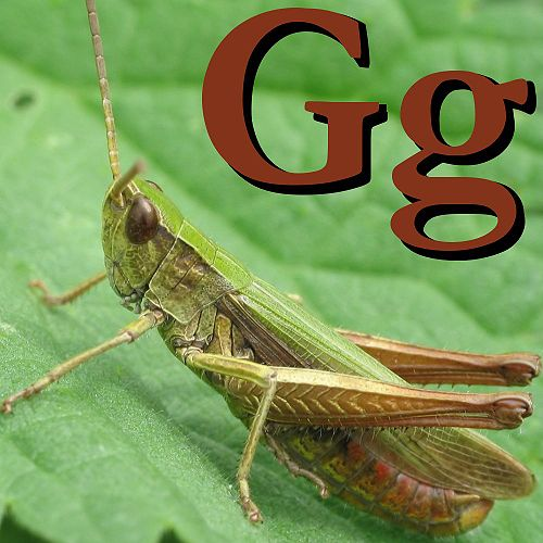 G is for Grasshopper.jpg