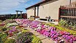 Garden Colours IMG 3075 (19319983884).jpg