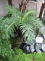 Gardenology-IMG 7939 hunt10aug.jpg