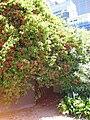 Gardenology.org-IMG 0316 rbgs10dec.jpg
