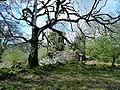 Garlies Castle, Minnigaff.jpg