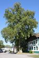 Gasthaus-Linde Geretsberg.png