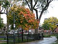 Gay Village, Montreal, QC, Canada - panoramio (5).jpg
