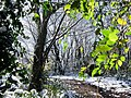 Georgia snow IMG 4861 (38947234481).jpg