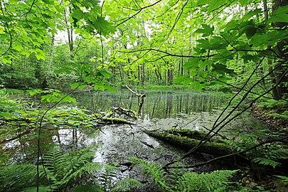 Geschützter Landschaftsbestandteil Schubertgrund in Sachsen. 2H1A1067WI.jpg