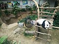Giant Panda Conservation Centre in Zoo Negara Malaysia 2021 (7).jpg