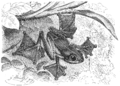 Gliding black-webbed tree frog.png