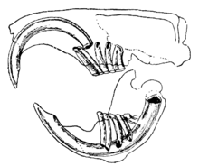Dentes De Rato Pdf
