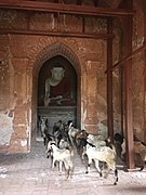 Goats in temple 578.jpg