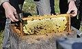 Golaskuri Beehive Honeycomb.jpg