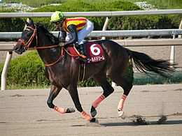 Gold Dream (horse) IMG 0922-1 20160504.jpg