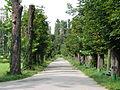 Grădina Botanică - Aleea Castanilor.JPG