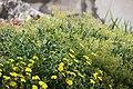 "Gradina Botanica ""Vasile Fati"" (4653385205).jpg"