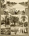 Great San Antonio, the city of destiny and of your destination (1918) (14598270127).jpg