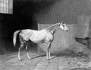 Grey Momus - Grey Momus in his stable: contemporary engraving
