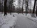 Großer Garten, Dresden in winter (1095).jpg