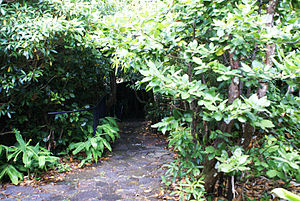 Gruta das Torres - Entrance covered with vegetation