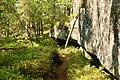 Guldbäcksleden Björnlandet national park 2.jpg