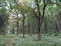 Hadwen Arboretum, Worcester MA.jpg